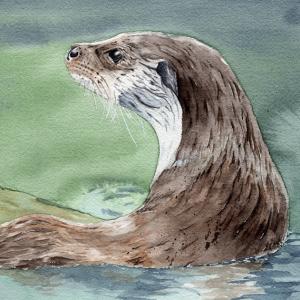 Animales - Fauna salvaje - Wildlife Art